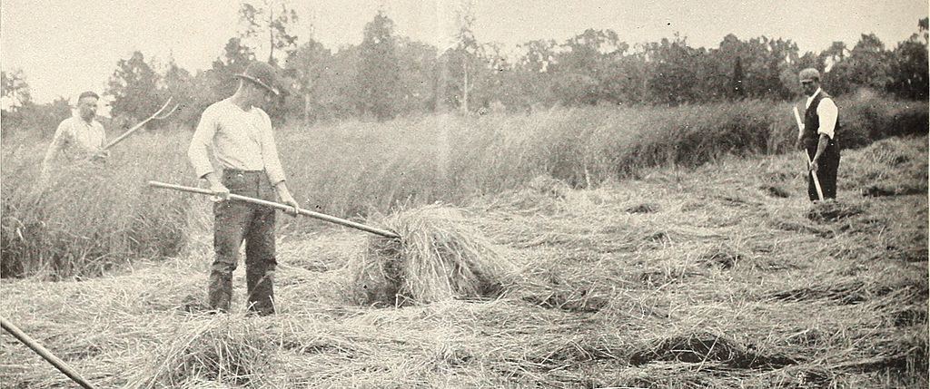 Organic Food - The History of Pesticides - American Farmers (1902)